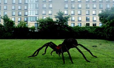 Arachnado arañas gigantes